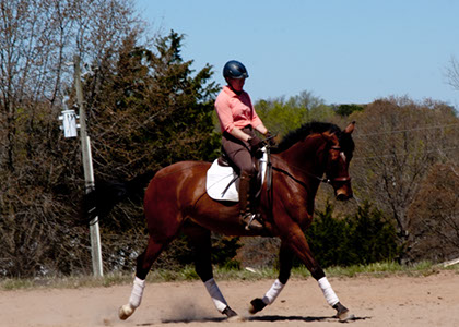 Lumi Lux 7 years old irish imported sporthorse for sale